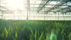 Cieplarnia z światłem słonecznym i zielonymi roślinami r w nim zbiory wideo