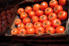 Cieplarniani pomidory fotografia stock