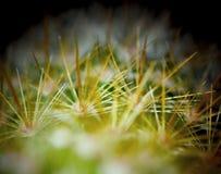 Cierń na kaktusie fotografia royalty free