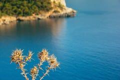 Cierni susi kwiaty z turkusowym morzem w tle, Kabak Va zdjęcia royalty free