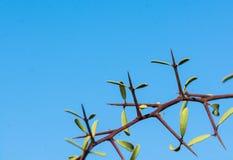 Ciernie i liść Zdjęcia Stock