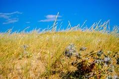 Cierniowata roślina Zdjęcie Stock