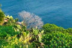 Cierniowaty kaktus morze Obrazy Royalty Free