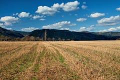 Ścierniskowych poly wczesna wiosna z zalesionymi górami w tle Obraz Royalty Free