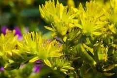 Cierre amarillo al azar de la flor encima de la foto Imagen de archivo libre de regalías