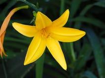 Cierre amarillo de la flor para arriba Fotos de archivo