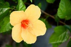 Cierre amarillo de la flor para arriba Foto de archivo