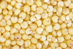 Cierre amarillo de la macro del mijo para arriba Fotografía de archivo