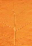 Cierre anaranjado de la hoja para arriba Imagenes de archivo