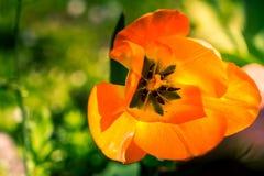 Cierre anaranjado del brote de flor para arriba foto de archivo