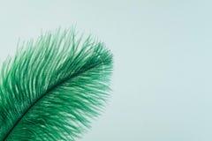 Cierre artificial verde de la pluma para arriba fotografía de archivo libre de regalías