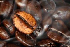 Cierre asado fresco de los granos de café para arriba Imagenes de archivo