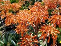 Cierre ascendente hermoso del remiendo anaranjado de la flor Imagenes de archivo