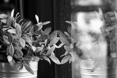 Cierre blanco y negro encima de la reflexión de poco árbol congelado en su florero Imagen de archivo