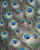 Cierre colorido de la pluma del pavo real para arriba Imagen de archivo