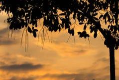 Cierre colorido de la puesta del sol encima de la hoja del árbol de la silueta en la estación de verano Fotografía de archivo