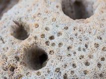 Cierre coralino de la roca para arriba Imágenes de archivo libres de regalías
