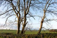 Cierre de ascendente de árboles Foto de archivo
