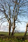 Cierre de ascendente de árboles Fotos de archivo