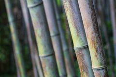 Cierre de bambú de la textura del bosque para arriba foto de archivo libre de regalías