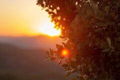 Cierre de Bush para arriba en una última puesta del sol fotografía de archivo