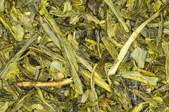 Cierre de Japón Sencha del té verde para arriba Fotos de archivo libres de regalías