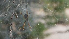 Cierre de la araña para arriba en la web almacen de metraje de vídeo