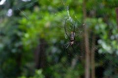 Cierre de la araña y del web de araña para arriba imagenes de archivo