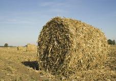 Cierre de la bala del maíz para arriba Fotos de archivo