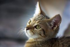 Cierre de la cara del gatito para arriba foto de archivo libre de regalías
