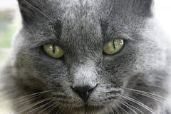 cierre de la cara del gato - para arriba Fotos de archivo