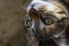 Cierre de la cara del gato para arriba Fotografía de archivo libre de regalías