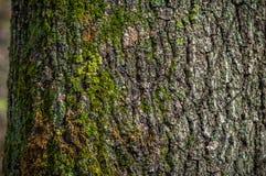 Cierre de la corteza de árbol para arriba fotos de archivo