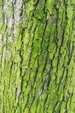 Cierre de la corteza de árbol del verde lima para arriba Fotos de archivo libres de regalías