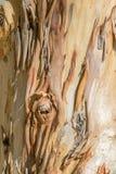 Cierre de la corteza de árbol encima de B Foto de archivo