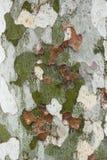 Cierre de la corteza de árbol plano para arriba Imagen de archivo
