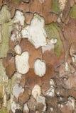 Cierre de la corteza de árbol plano para arriba Fotos de archivo