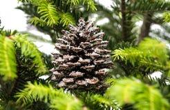 cierre de la decoración de la Navidad para arriba de la rama natural del abeto Foto de archivo libre de regalías