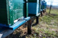 Cierre de la entrada de la colmena para arriba, colmenas en fila imagen de archivo libre de regalías