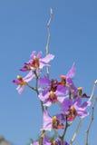 Cierre de la flor de la orquídea para arriba con el fondo del cielo azul fotos de archivo