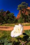 Cierre de la flor de Zion National Park para arriba Fotos de archivo libres de regalías
