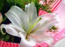 Cierre de la flor del lirio para arriba Fotos de archivo libres de regalías