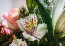 Cierre de la flor del lirio para arriba Fotos de archivo