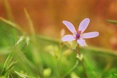 Cierre de la flor de la primavera para arriba Foto de archivo