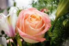 Cierre de la flor de la rosa del rosa para arriba Foto de archivo