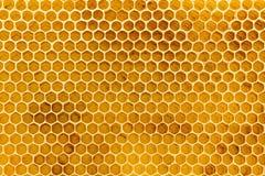 Cierre de la fundación del panal de la cera de abejas para arriba Imágenes de archivo libres de regalías