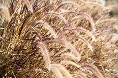 Cierre de la hierba de prado para arriba Foto de archivo
