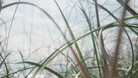 Cierre de la hierba salvaje para arriba almacen de video