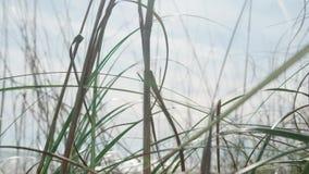 Cierre de la hierba salvaje para arriba metrajes