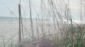 Cierre de la hierba salvaje para arriba almacen de metraje de vídeo